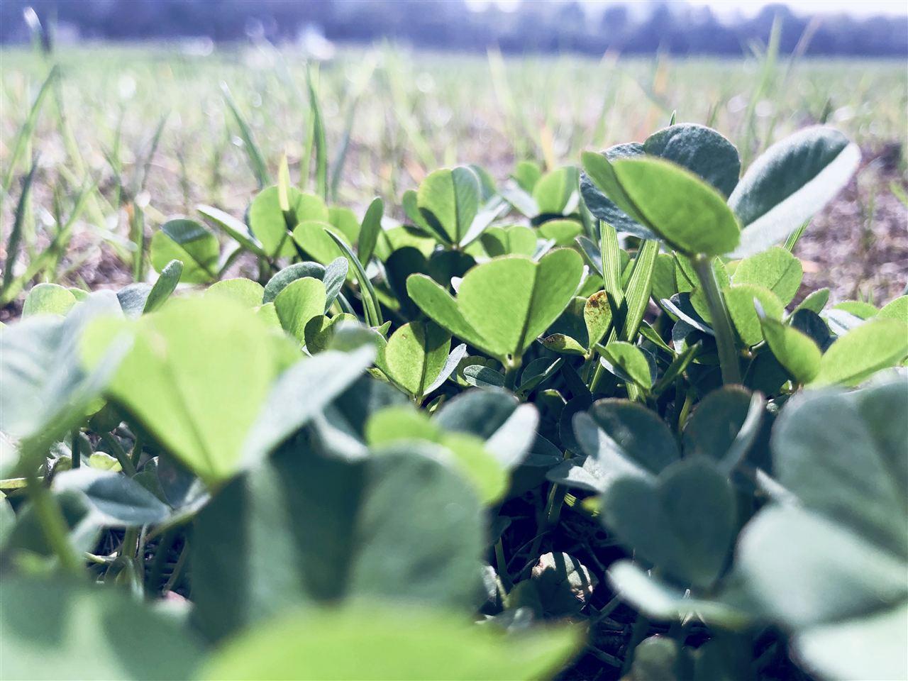 新技术 有望实现茶叶农残现场快检