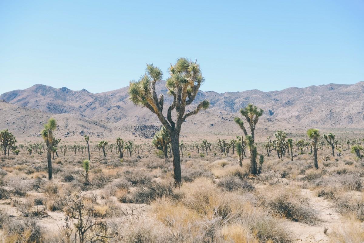 科学治理盐碱地 土壤分析促进作物正常生长